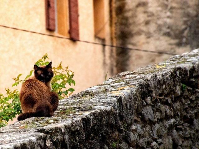 Forcalquier Cat 3841061 1920